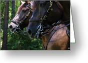 Quarter Horses Greeting Cards - Standing Around Greeting Card by Greg Patzer