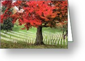 Veterans Day Greeting Cards - Standing Firm Greeting Card by JC Findley