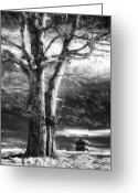 Groundhog Greeting Cards - Standing Guard II Greeting Card by Dan Carmichael