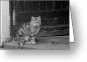 Kitty Digital Art Greeting Cards - Standing Guard Greeting Card by Mike McGlothlen