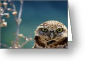 Owl Greeting Cards - Standing My Ground Deux Greeting Card by Fraida Gutovich