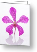 Vibrant Photo Greeting Cards - Standing Orchid Head Greeting Card by Atiketta Sangasaeng