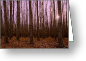 Brown Leaves Greeting Cards - Standing Tall Greeting Card by Dan Mihai