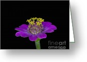 Decor Floral Picture Cards Greeting Cards - Standing Tall in the Shadows Greeting Card by Cris Hayes
