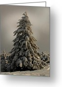 Snow Storm Greeting Cards - Standing Tall Greeting Card by Lois Bryan