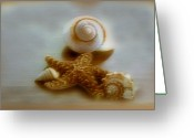 Linda-sannuti Art Greeting Cards - Star and Shells Greeting Card by Linda Sannuti