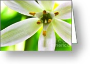 Star Of Bethlehem Greeting Cards - Star of Bethlehem Grass Lily Greeting Card by Ryan Kelly