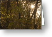 Contre Jour Greeting Cards - Starburst Trees Greeting Card by Steve Purnell