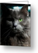 Blue Cat Greeting Cards - Stare Down Greeting Card by Joann Vitali