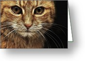 Cat Picture Greeting Cards - Stare Greeting Card by Tilly Williams