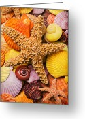 Pile Greeting Cards - Starfish and seashells  Greeting Card by Garry Gay
