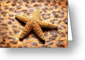 Shell Texture Greeting Cards - Starfish Enterprise Greeting Card by Andee Photography
