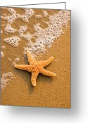 Spume Greeting Cards - Starfish on the Beach Greeting Card by Utah Images