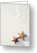 Beach Greeting Cards - Starfish On Tropical Beach Greeting Card by Mehmed Zelkovic