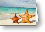 Tropical Climate Greeting Cards - Starfish On Tropical Caribbean Beach Greeting Card by Mehmed Zelkovic
