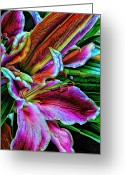 Stamen Greeting Cards - Stargazer Lilies Up Close and Personal Greeting Card by Bill Tiepelman