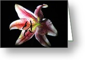 Iphonesia Greeting Cards - Stargazer on Black Greeting Card by Mickey Hatt
