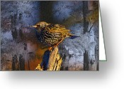 Cypress Digital Art Greeting Cards - Starling Sitting High Greeting Card by J Larry Walker