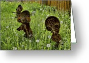 Baraboo Greeting Cards - Starmen Encounter Dandelion Attack Greeting Card by Nick Roberts