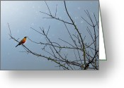 Red Bird Greeting Cards - Starry Night Greeting Card by Rebecca Cozart