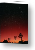 Starfield Greeting Cards - Starry Sky And Sunset Taken In Joshua Tree Park Greeting Card by David Nunuk