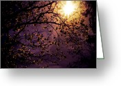 Purple Sky Greeting Cards - Stars in an Earthly Sky Greeting Card by Vivienne Gucwa