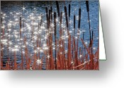 Twinkle Greeting Cards - Stars Twinkle on Cattails Greeting Card by Lee Chon