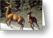 Antlers Greeting Cards - Startled - variation Greeting Card by Crista Forest