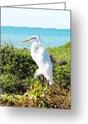 Surroundings Greeting Cards - Statuesque Heron Vanilla Pop Greeting Card by Chris Andruskiewicz