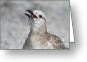 Seagull Photo Greeting Cards - Stay Away From My Food Greeting Card by Deborah Benoit