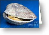 Photos Still Life Greeting Cards - Steamed clam Greeting Card by Frank Tschakert