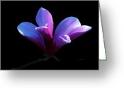 Tulip Art Botanical Art Mixed Media Greeting Cards - Steel Magnolia Greeting Card by Patricia Griffin Brett