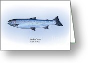 Game Drawings Greeting Cards - Steelhead Trout Greeting Card by Ralph Martens