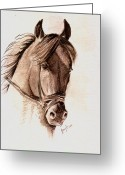 Remy Francis Greeting Cards - Steely Black Stallion Greeting Card by Remy Francis