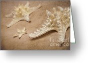 Oblique Mixed Media Greeting Cards - Stella Marina Greeting Card by Angela Doelling AD DESIGN Photo and PhotoArt