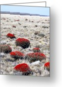 Arid Country Greeting Cards - Steppe Country On The Road From El Calafate To Esperanza Greeting Card by Damien Simonis