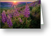 Butte Greeting Cards - Steptoe Butte Lupine At Sunset Greeting Card by Richard Mitchell - Touching Light Photography