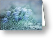 Pasque Flower Greeting Cards - Stick Together Greeting Card by Priska Wettstein