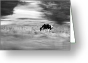 Black Elk Greeting Cards - Still But In Motion Greeting Card by James Steele