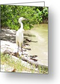 White Sand Greeting Cards - Still Looking for Lunch GP Greeting Card by Chris Andruskiewicz