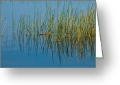 Reeds Reflections Greeting Cards - Still Water and Grasses Greeting Card by Rich Franco