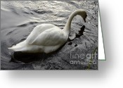 Canada Swan Greeting Cards - Still Waters Run Deep Greeting Card by Bob Christopher