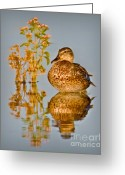 Still Water Greeting Cards - Still Waters Greeting Card by Susan Candelario