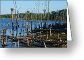 Poster Prints Greeting Cards - Still Wood - Manasquan Reservoir Greeting Card by Angie McKenzie