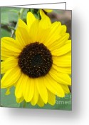 Flower Still Life Prints Greeting Cards - Still Yellow Greeting Card by France Laliberte