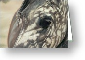 Horses Pastels Greeting Cards - Stillness Greeting Card by Kim McElroy