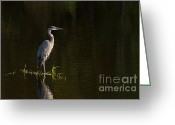 Heron.birds Greeting Cards - Stillness Greeting Card by Reflective Moments  Photography and Digital Art Images