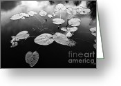 Lilly Pads Photo Greeting Cards - Stillness Greeting Card by Scott Pellegrin