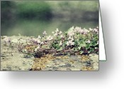 Denmark Greeting Cards - Stone Wall With Flowers Greeting Card by Silvia Otten-Nattkamp Photography