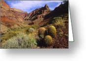 Rain Barrel Photo Greeting Cards - Stonecreek Canyon In The Grand Canyon Greeting Card by David Edwards